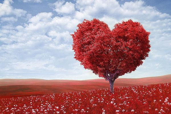 amore scelta psicologa Chiara Missana
