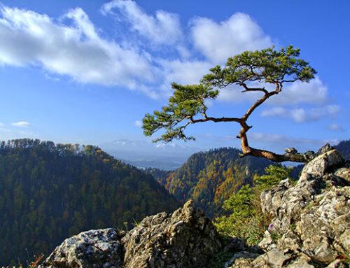 La resilienza come trasformazione del dolore